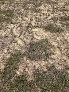 Marquette Park soccer field conditions.