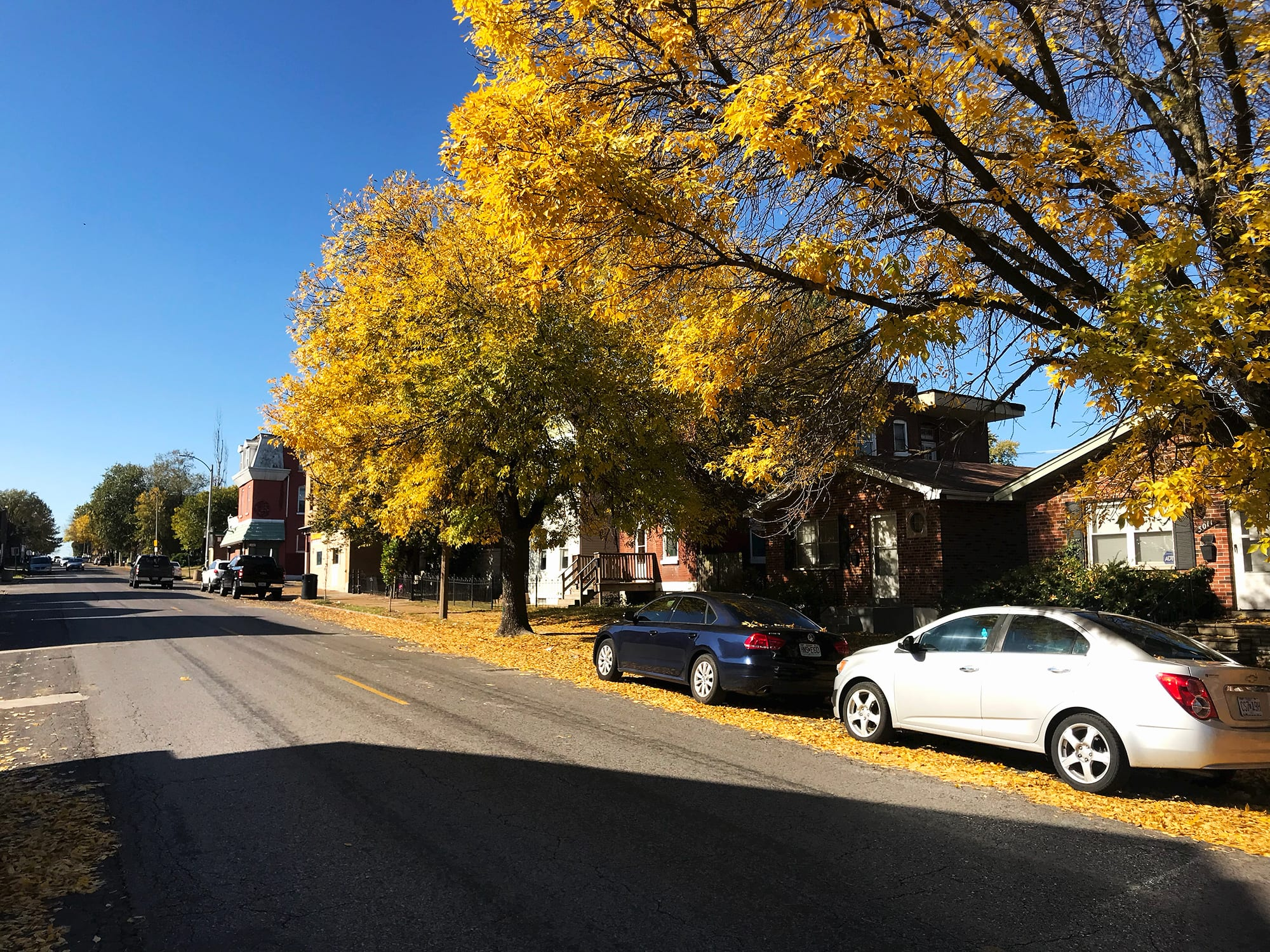 Fall foliage on Chippewa Street between Dutchtown and Gravois Park.