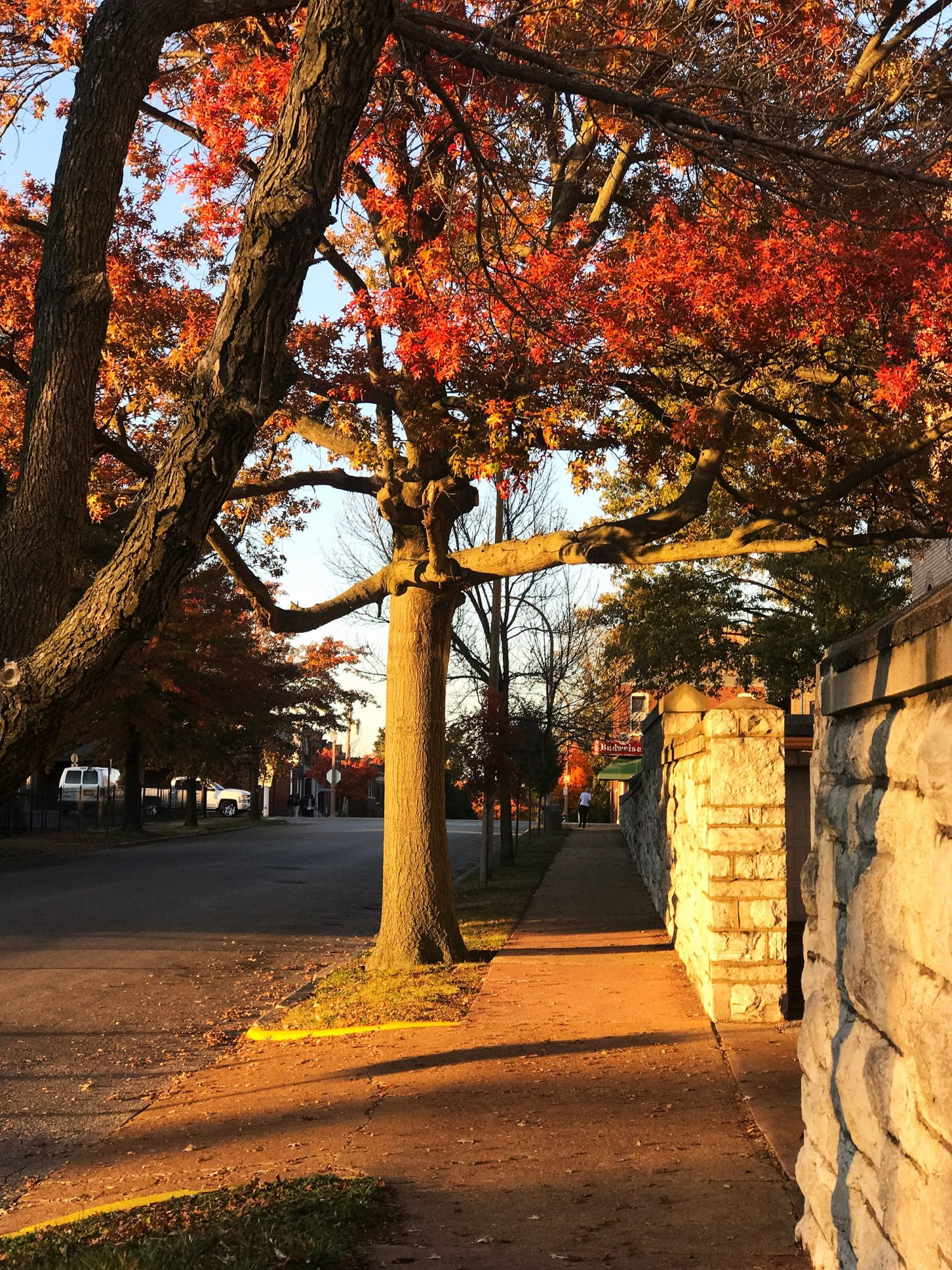 Fall foliage on Compton Avenue in Dutchtown.