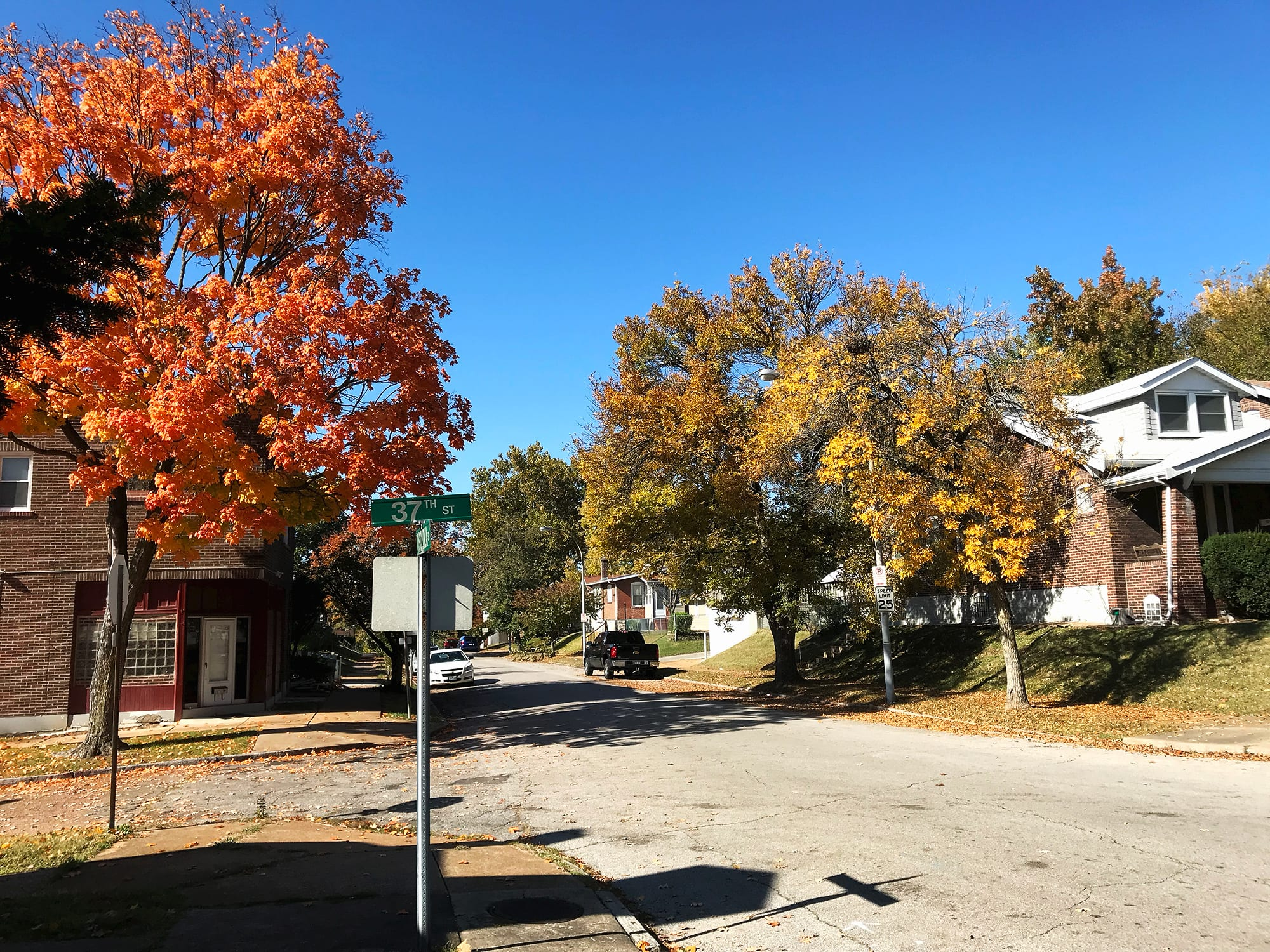 Fall foliage at Osceola and 37th in Dutchtown.