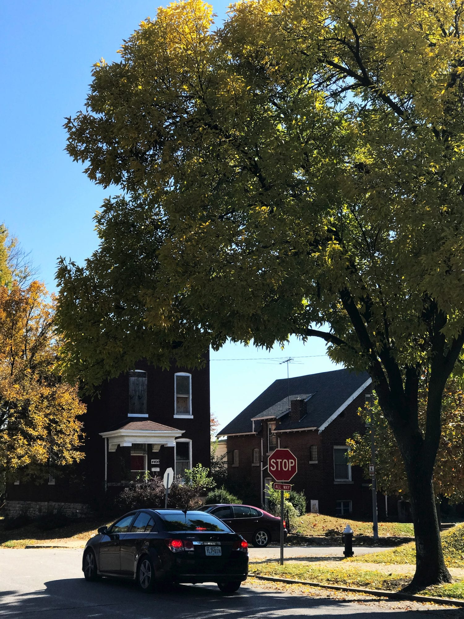 Fall foliage on Osceola at Tennessee in Dutchtown.