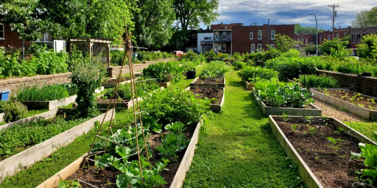 Beds at the Dutchtown Community Garden, also known as the VAL Garden.