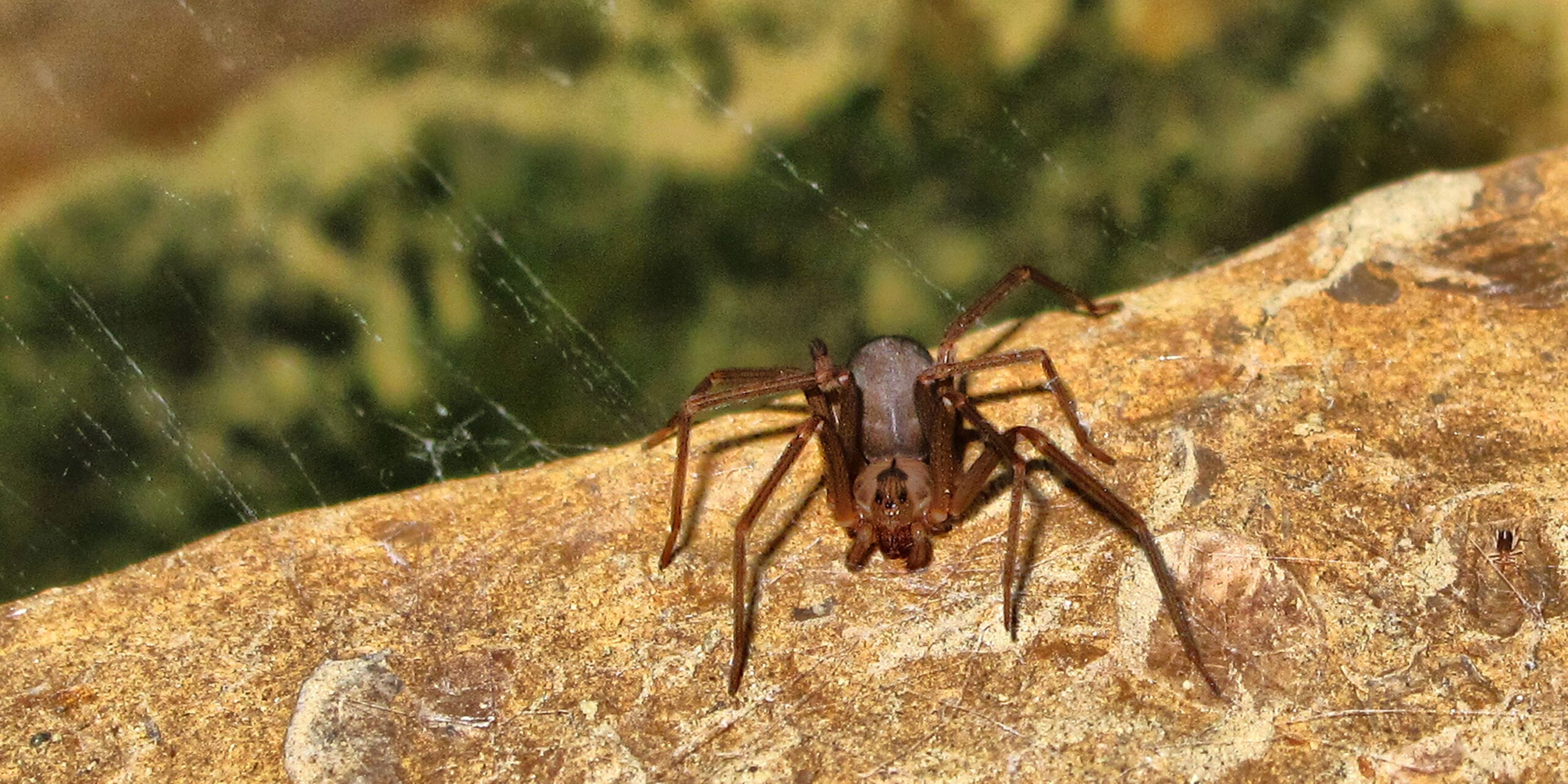 A brown recluse. RDM successfully defended a premises liability claim involving a spider bite at a hotel.